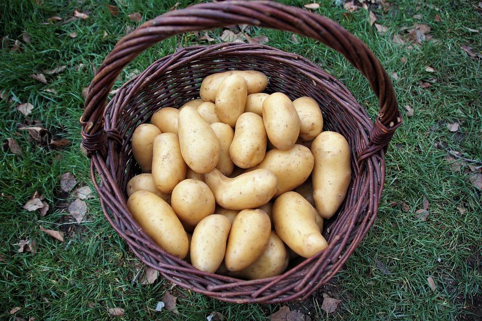 Как картошка попала на наш стол и чем она полезна