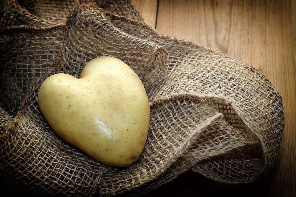 клубень картофеля на полотне
