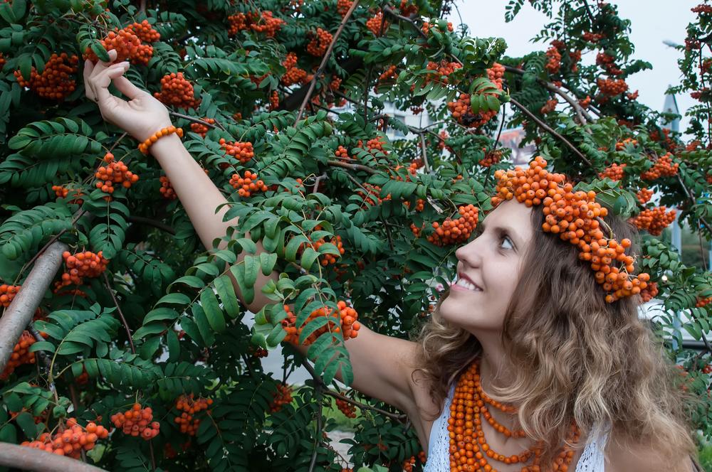 женщина собирает ягоды красной рябины