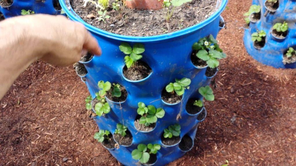 бочка для выращивания