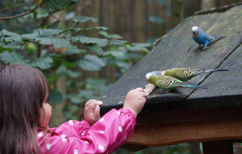 птицы попугаи на крыше
