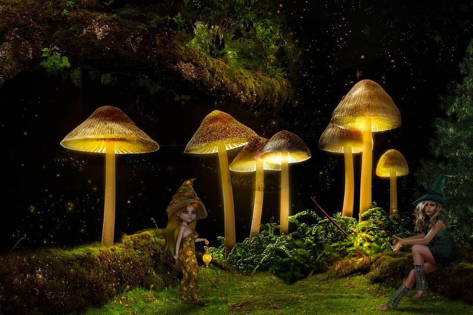 разновидности грибов семейства псилоцибе