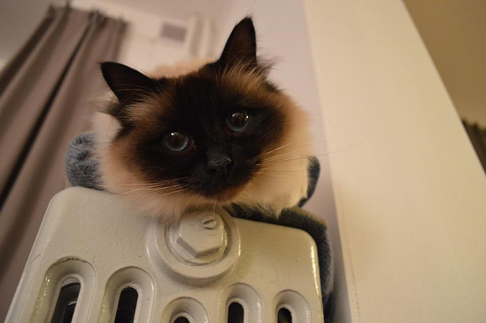 Холода - не беда: выбираем газовый котел