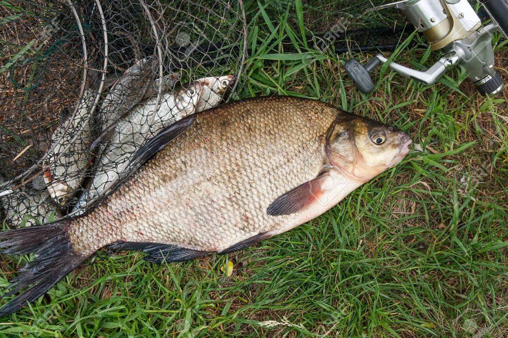 рыбалка в сентябре на леща