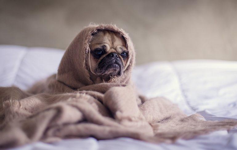 собаку согревает электрическое постельное белье