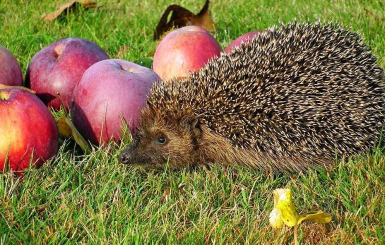 Райский фрукт: отмечаем День яблока